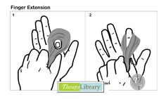 Assorted Finger Extension