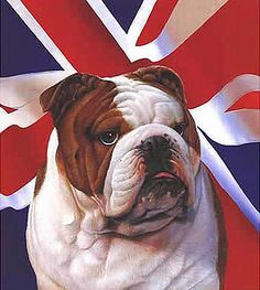 british-bulldog by Frontlineweb lowestoft, via Flickr