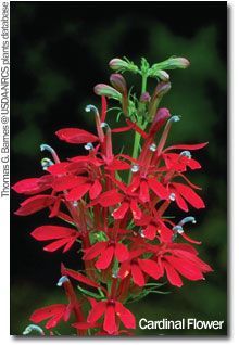 25+ Maryland Native Plants For Landscaping Pictures and