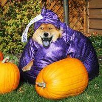 Dog Halloween Costumes on Pinterest | Dog Halloween ...