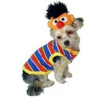 Dog Costumes on Pinterest   Pet Costumes, Pugs and Pet ...