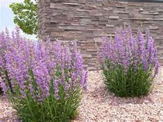 xeriscaping in texas panhandle