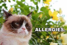 Allergy Season on Pinterest   Tissue Holders, Allergy Relief and ...