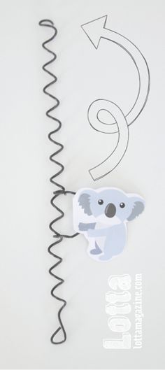 koala love on Pinterest