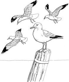 Thema meeuwen voor kleuters / Seagull theme preschool