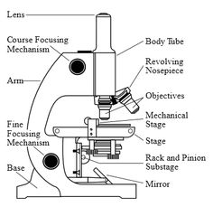 Parts and Functions of a Light Microscope (Part II)