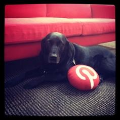 Tucker loves Pinterest!