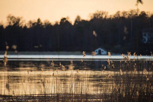 Finland in autumn, coast, reeds, ruohikkoa rannikolla