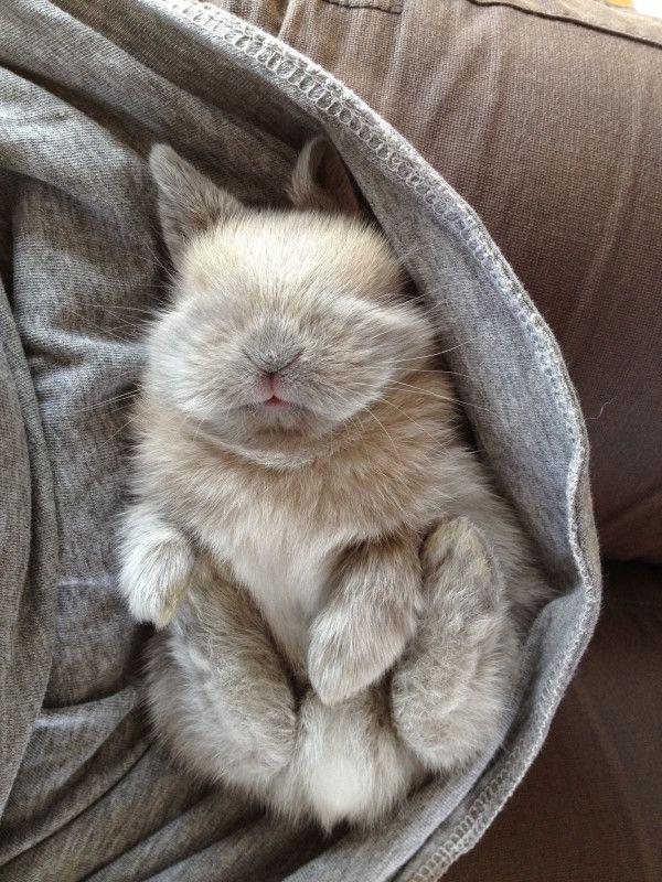 Sleeping Bunny #cute