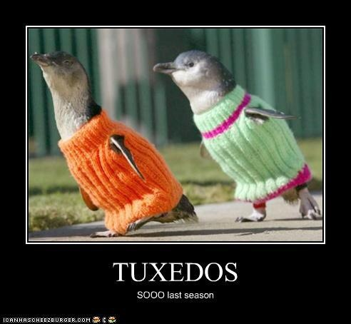 Animals look silly in sweaters.