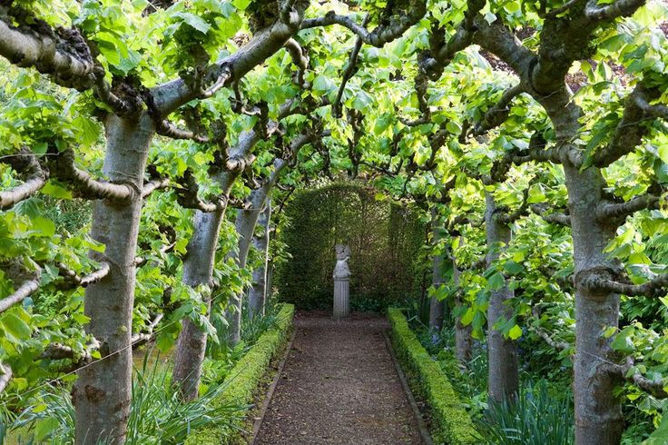 Backyard Landscaping With Fruit Trees – Thorplc Com