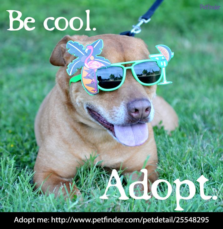 Repin if you agree with cool adoptable Crockett! Click through for more information about him.