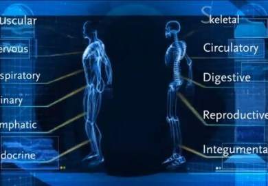 12 Major Body Systems