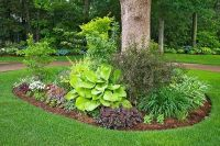 2 Landscaping: Landscaping Ideas Under Trees