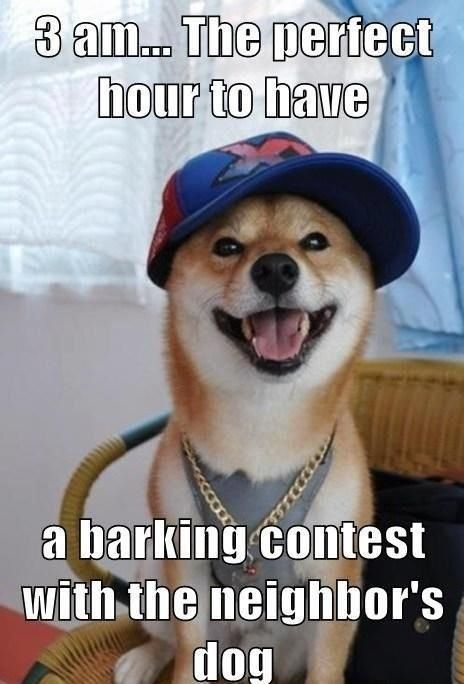 Middle of the night barking contests