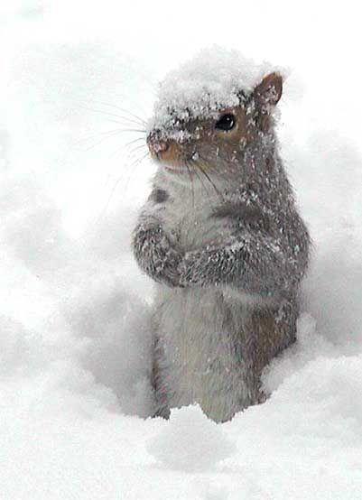 Squirrel ♥