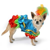 Calypso Parrot Dog Costume | Doggy stuff | Pinterest