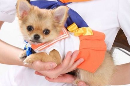 Image result for sailor moon dog costumes