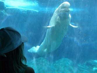 beluga whale baby uploaded user