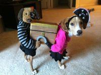 Pirate dog costume | Halloween | Pinterest