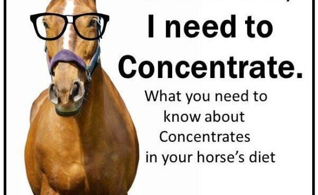 What Are Concentrates In The Horse Diet Horse Of A