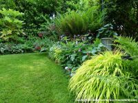 Light shade border plants in my garden | Back Patio ...