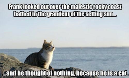Lol so not true!! Cats have feelings