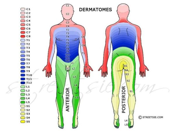 dermatomes Energy Healing Pinterest