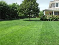 Backyard Garden With Perfect Lawn ! | Favorite Places ...