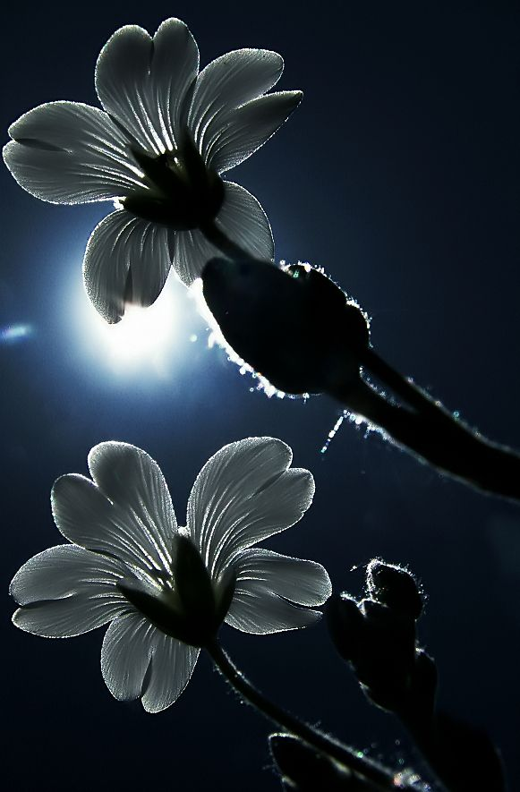 Flower Photo - Awesome Effect !