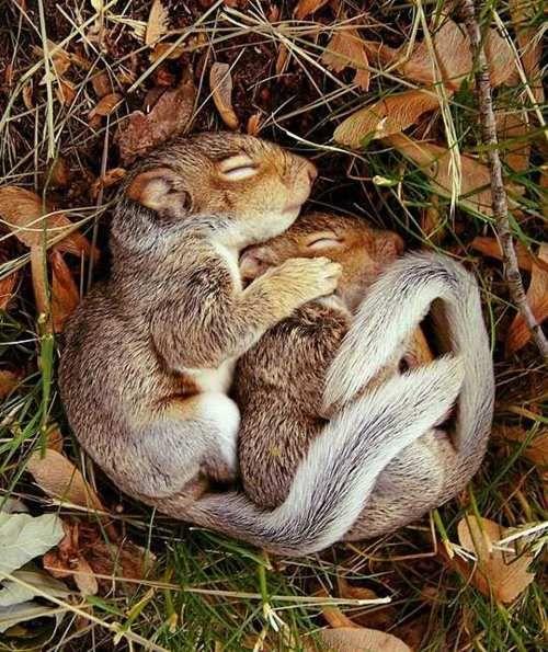 cuddle-up...seasonal-love via brydiebrown.tumblr