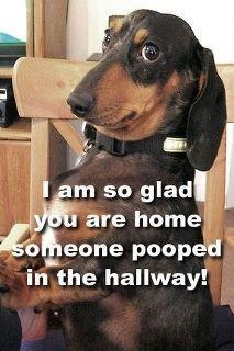 Funny Pictures: I am so glad you are home, someone pooped in the hallway