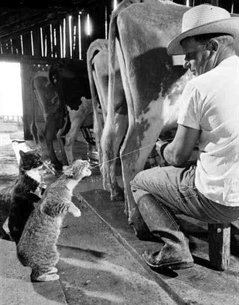 Meanwhile, at the milk bar...