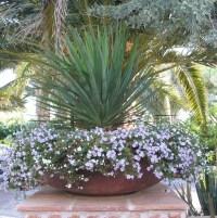 Potted plant Idea | Pot plant ideas | Pinterest