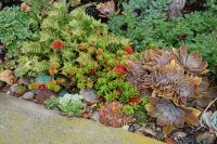 Succulents rock garden | Rock Gardens & Ground Covers ...