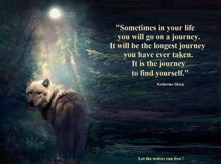 Terrence Mckenna Wallpaper Quotes Wise Wolf Quotes Quotesgram