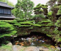 Koi pond   Japanese Gardening & style   Pinterest