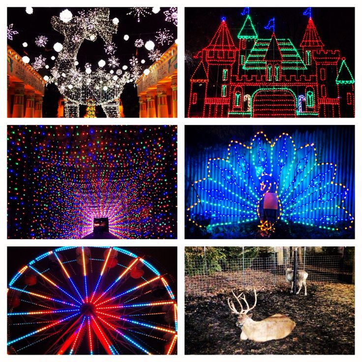 Zoo Lights Memphis Tn