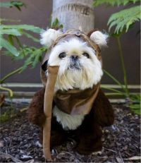 Ewok Costumes For Dogs | Cute Pet Pics | Pinterest