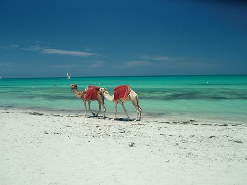 Tunisia: Mediterranean beaches and camels is there any other way? Tunisia it's on my list!  http://vip-travel.ge