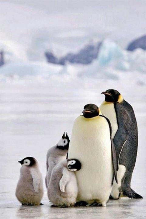 family<3