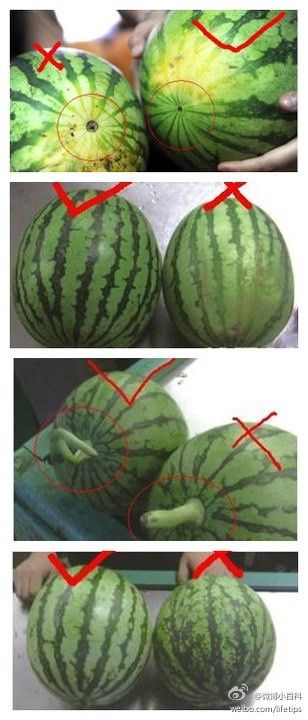 """Choose a watermelon that's dull, not shiny, uniform in shape, look for the creamy patch - the deeper in color, the longer the melon has been ripening, the """"navel"""" should be small, the stem should have started to curve, the light stripes should be raggety and broken, the dark stripes evenly colored and the contrast between stripes should be small, and the melon should be firm, not hard and not soft either, and it should have slight ridges lengthwise around its """"waist""""."""