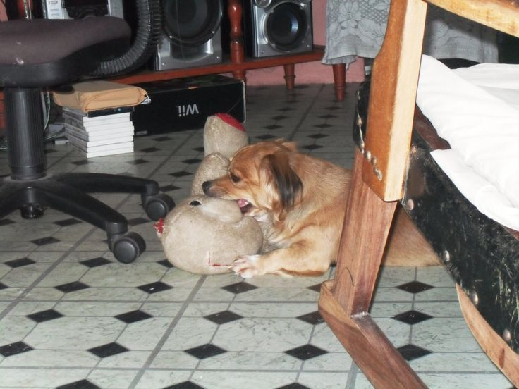 A member's dog. He's really funny and sleeps sucking the nose of his stuffed bear.