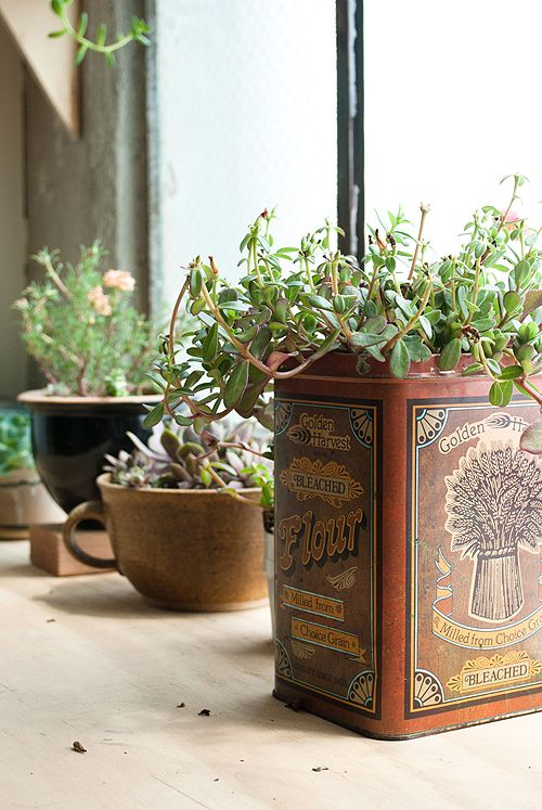 Sneak Peek: Best of Indoor Plants. Vintage small vessels make perfect containers for a collection of succulents at Ariele Alasko's studio. #sneakpeek