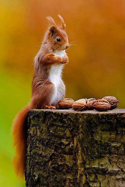So do not worry, saying, 'What shall we eat? Matthew 6:31  God loves and cares for all his creation. *~*