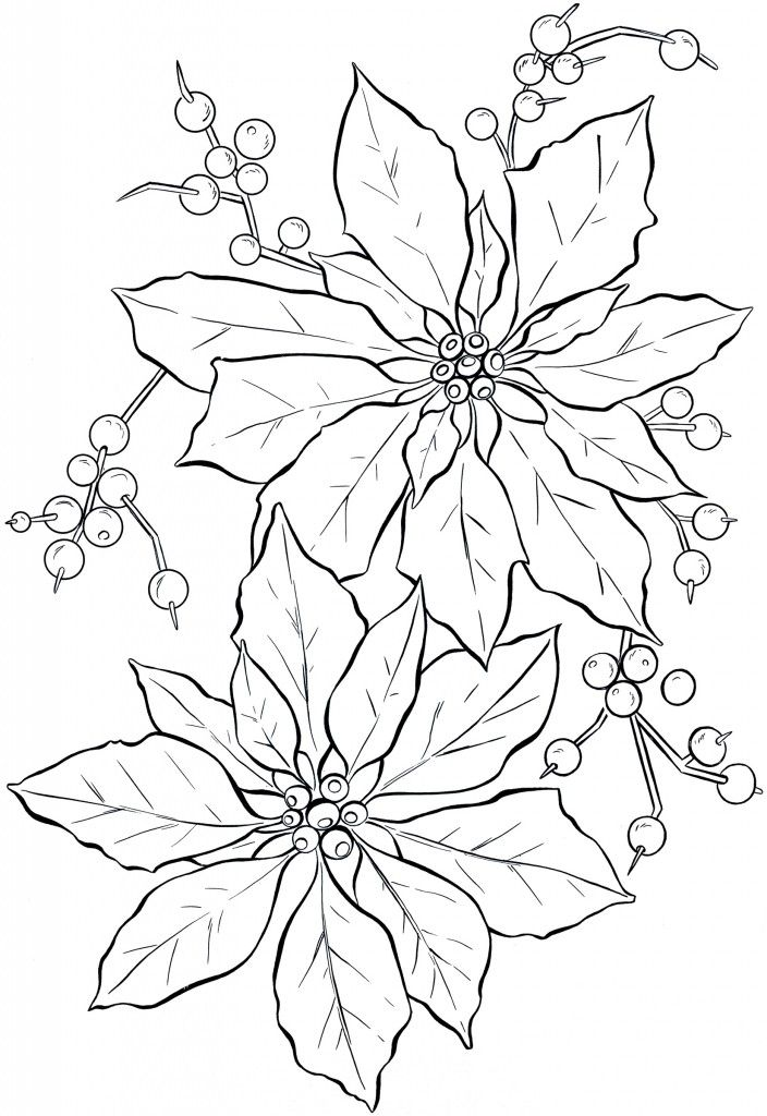 poinsettia line art  christmas