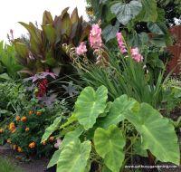 Tropical Garden Borders | tropical landscaping ideas ...