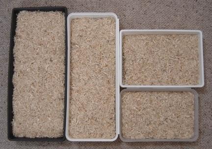 pig litter box solutions