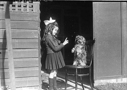 Girl teaching dog to sit