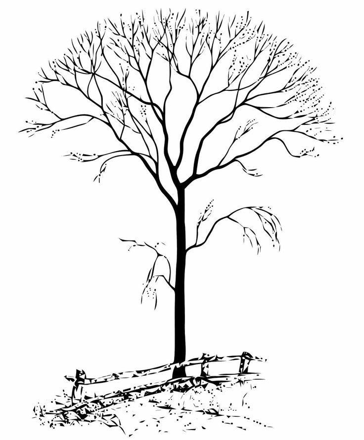 fall tree coloring page  bing images  coloring pages